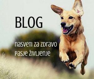 blog klik