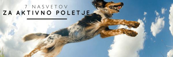 Nasveti za aktivno pasje poletje