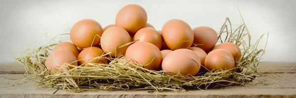 jajca prosta reja vir kalcija