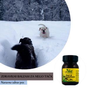 Zaščita tačk pred mrazom, snegom in soljo